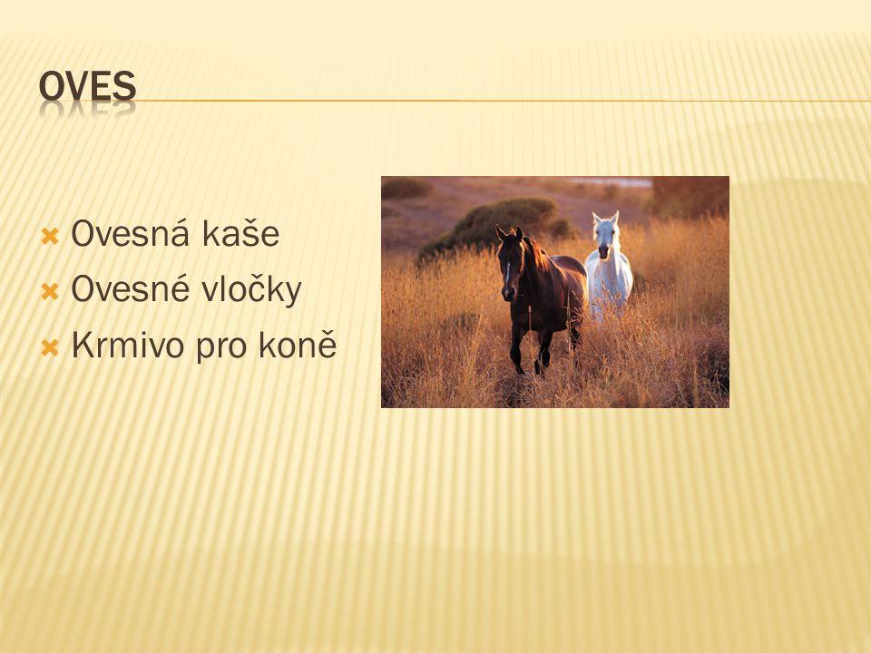  Ovesná kaše  Ovesné vločky  Krmivo pro koně