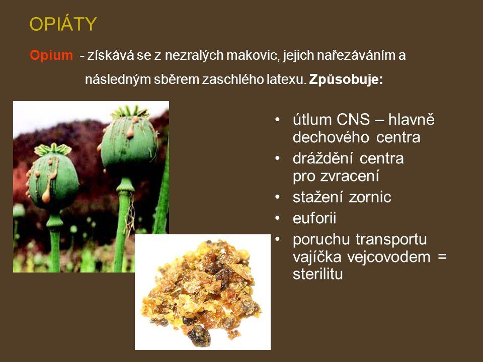 OPIÁTY útlum CNS – hlavně dechového centra dráždění centra pro zvracení stažení zornic euforii poruchu transportu vajíčka vejcovodem = sterilitu Opium - získává se z nezralých makovic, jejich nařezáváním a následným sběrem zaschlého latexu.