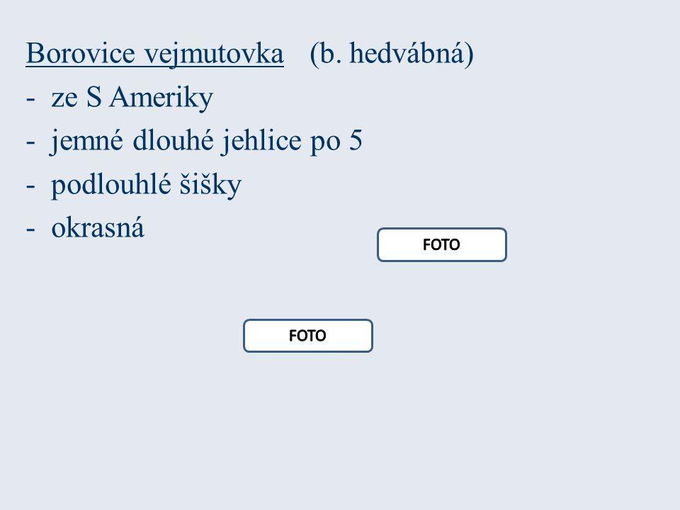 Borovice vejmutovka (b.