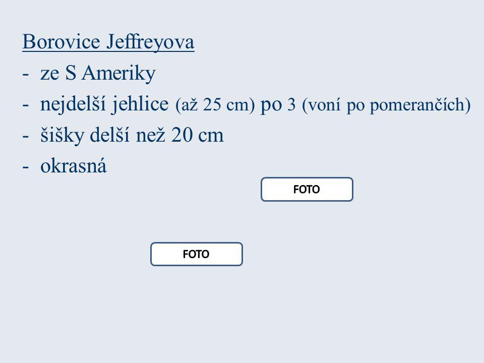 Borovice Jeffreyova -ze S Ameriky -nejdelší jehlice (až 25 cm) po 3 (voní po pomerančích) -šišky delší než 20 cm -okrasná