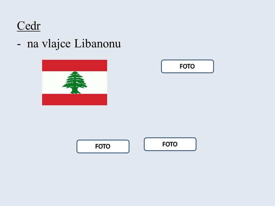 Cedr -na vlajce Libanonu