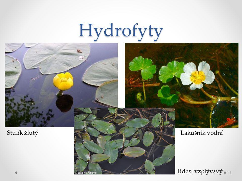 Hydrofyty 11 Stulík žlutý Rdest vzplývavý Lakušník vodní