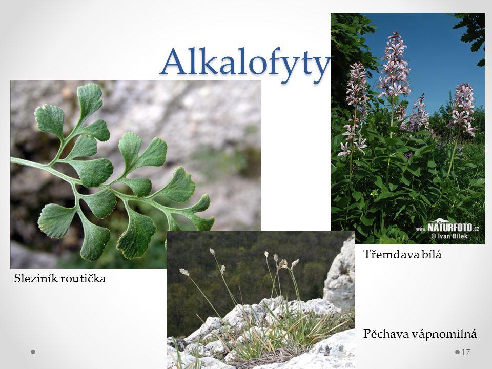 Alkalofyty 17 Sleziník routička Třemdava bílá Pěchava vápnomilná