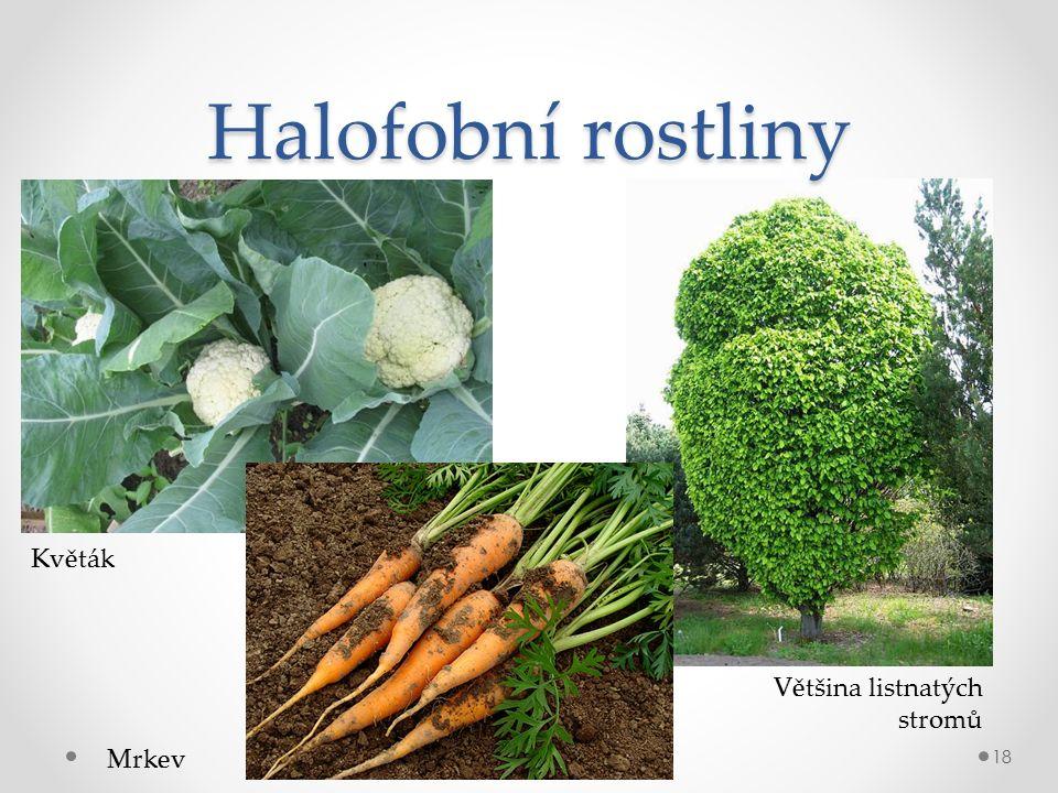 Halofobní rostliny 18 Květák Mrkev Většina listnatých stromů