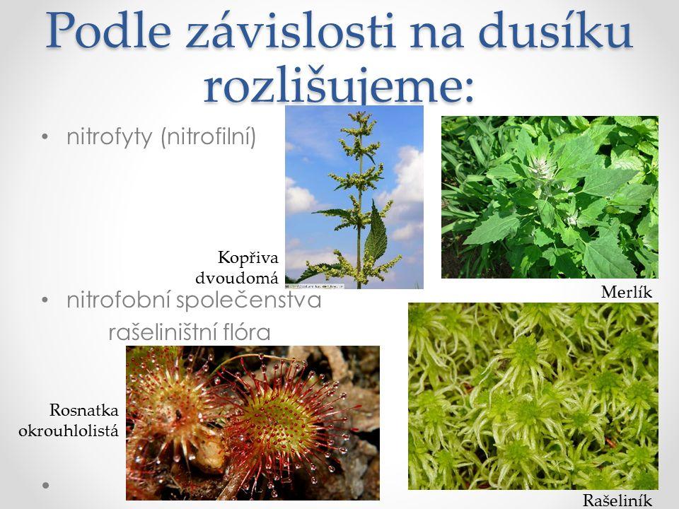 Podle závislosti na dusíku rozlišujeme: nitrofyty (nitrofilní) nitrofobní společenstva rašeliništní flóra 27 Kopřiva dvoudomá Merlík Rosnatka okrouhlolistá Rašeliník