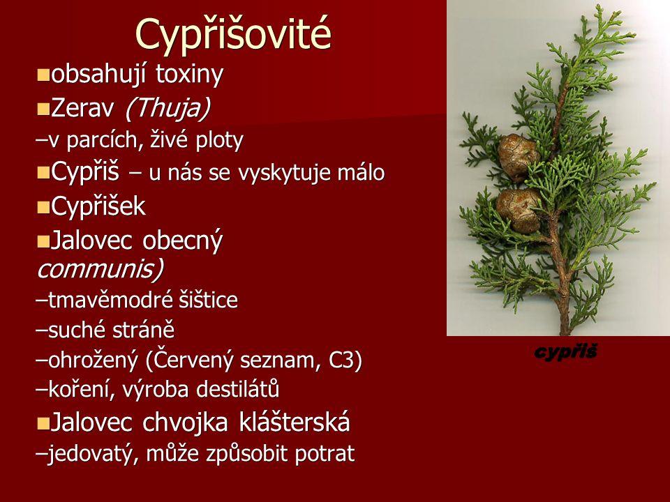 Cypřišovité obsahují toxiny obsahují toxiny Zerav (Thuja) Zerav (Thuja) –v parcích, živé ploty Cypřiš – u nás se vyskytuje málo Cypřiš – u nás se vyskytuje málo Cypřišek Cypřišek Jalovec obecný (Juniperus communis) Jalovec obecný (Juniperus communis) –tmavěmodré šištice –suché stráně –ohrožený (Červený seznam, C3) –koření, výroba destilátů Jalovec chvojka klášterská Jalovec chvojka klášterská –jedovatý, může způsobit potrat cypřiš