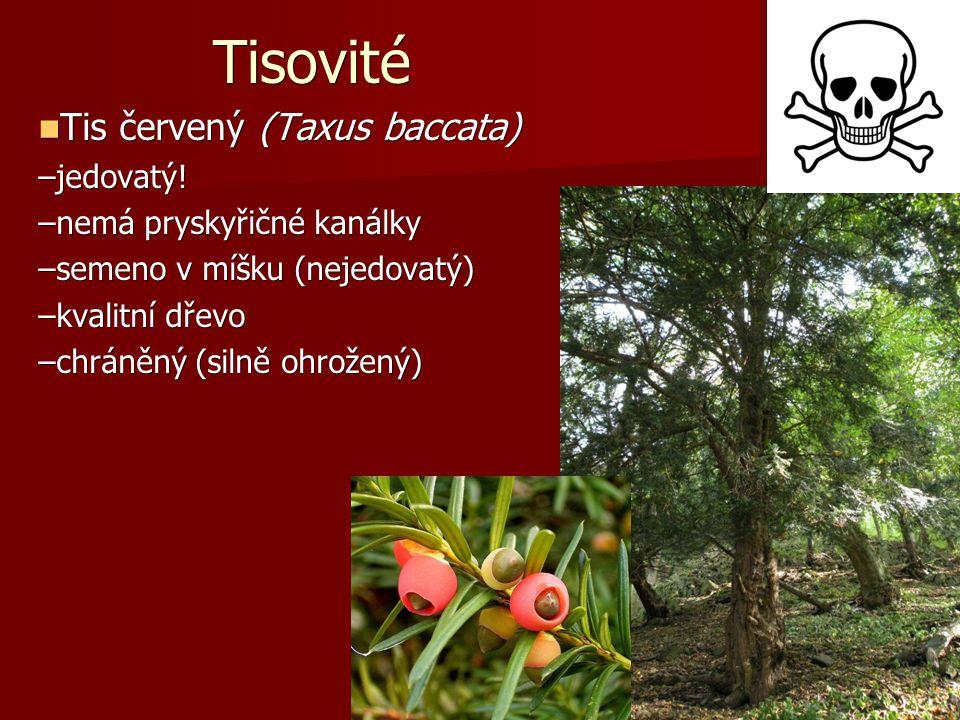 Tisovité Tis červený (Taxus baccata) Tis červený (Taxus baccata) –jedovatý.