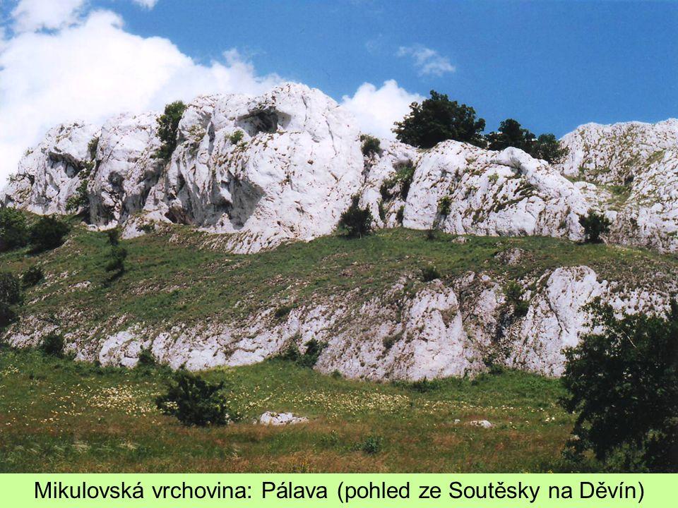Mikulovská vrchovina: Pálava (pohled ze Soutěsky na Děvín)