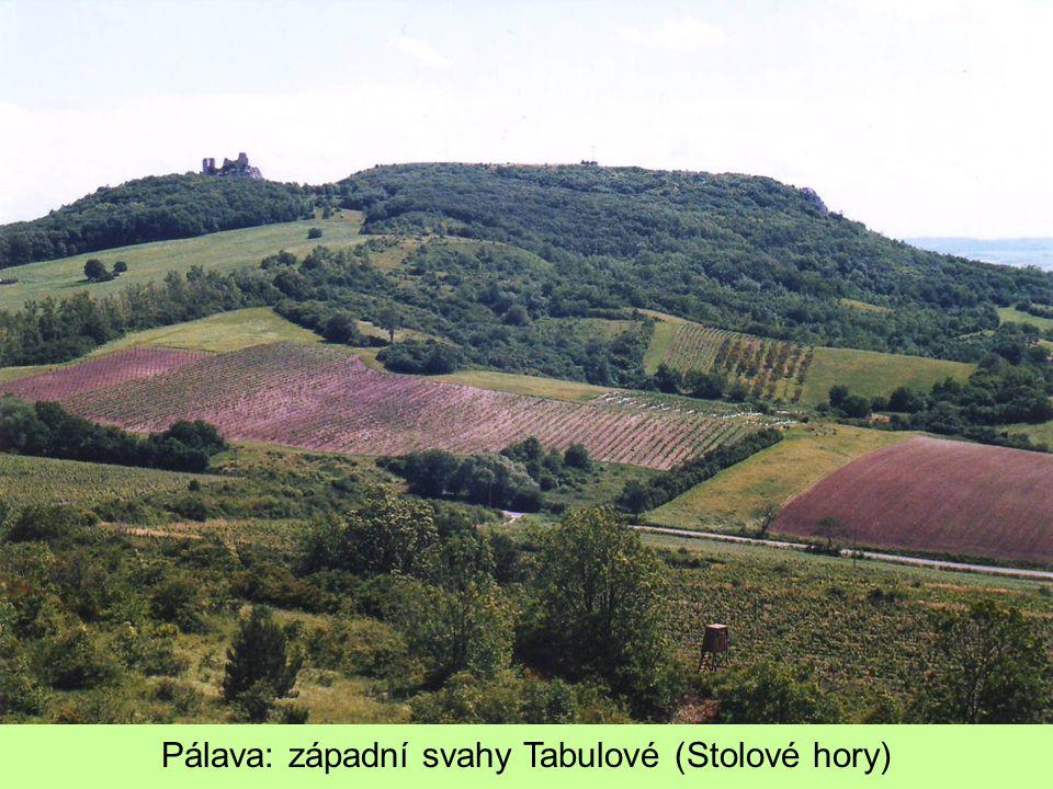 Pálava: západní svahy Tabulové (Stolové hory)