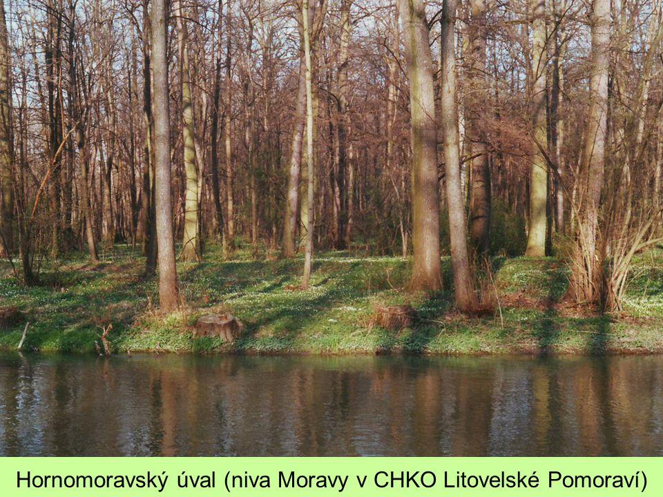 Hornomoravský úval (niva Moravy v CHKO Litovelské Pomoraví)