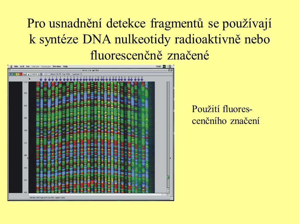Pro usnadnění detekce fragmentů se používají k syntéze DNA nulkeotidy radioaktivně nebo fluorescenčně značené Použití fluores- cenčního značení
