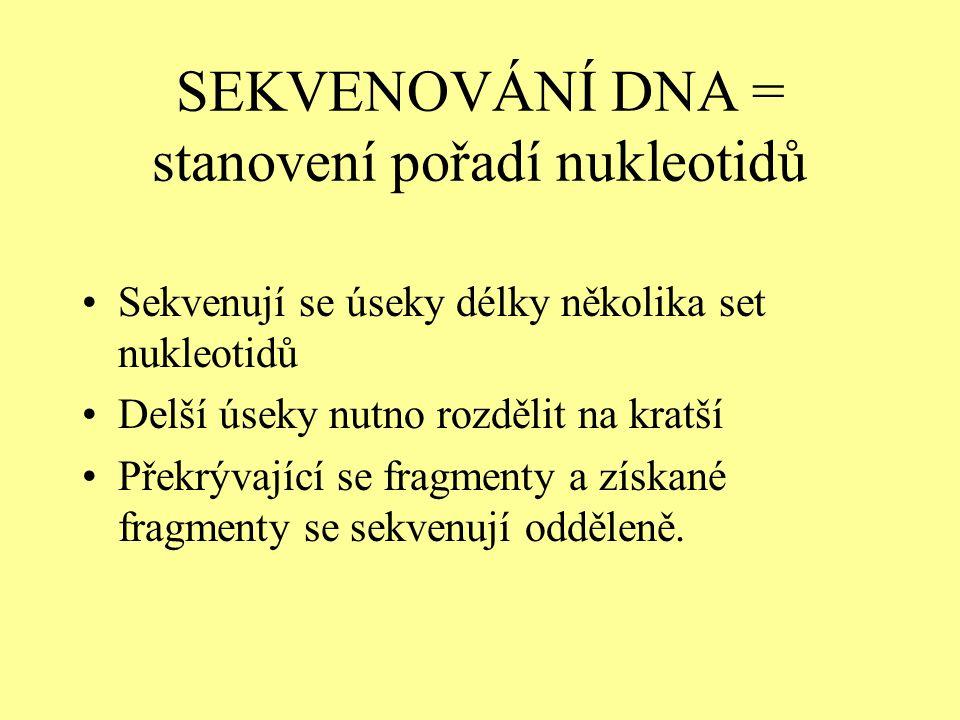 SEKVENOVÁNÍ DNA = stanovení pořadí nukleotidů Sekvenují se úseky délky několika set nukleotidů Delší úseky nutno rozdělit na kratší Překrývající se fragmenty a získané fragmenty se sekvenují odděleně.