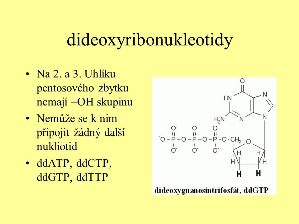 dideoxyribonukleotidy Na 2. a 3.