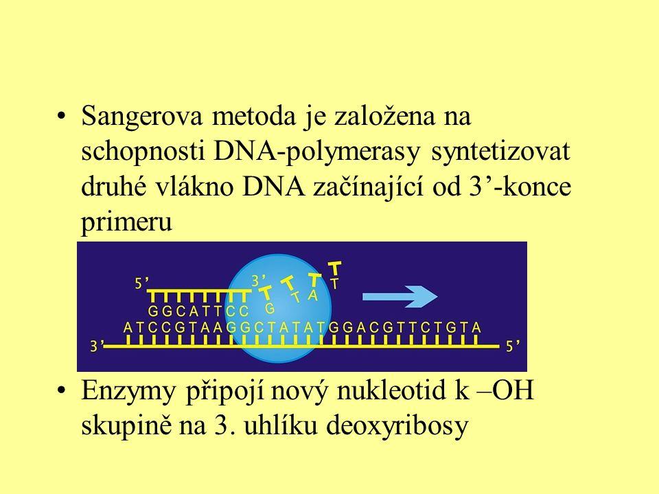 Sangerova metoda je založena na schopnosti DNA-polymerasy syntetizovat druhé vlákno DNA začínající od 3'-konce primeru Enzymy připojí nový nukleotid k –OH skupině na 3.