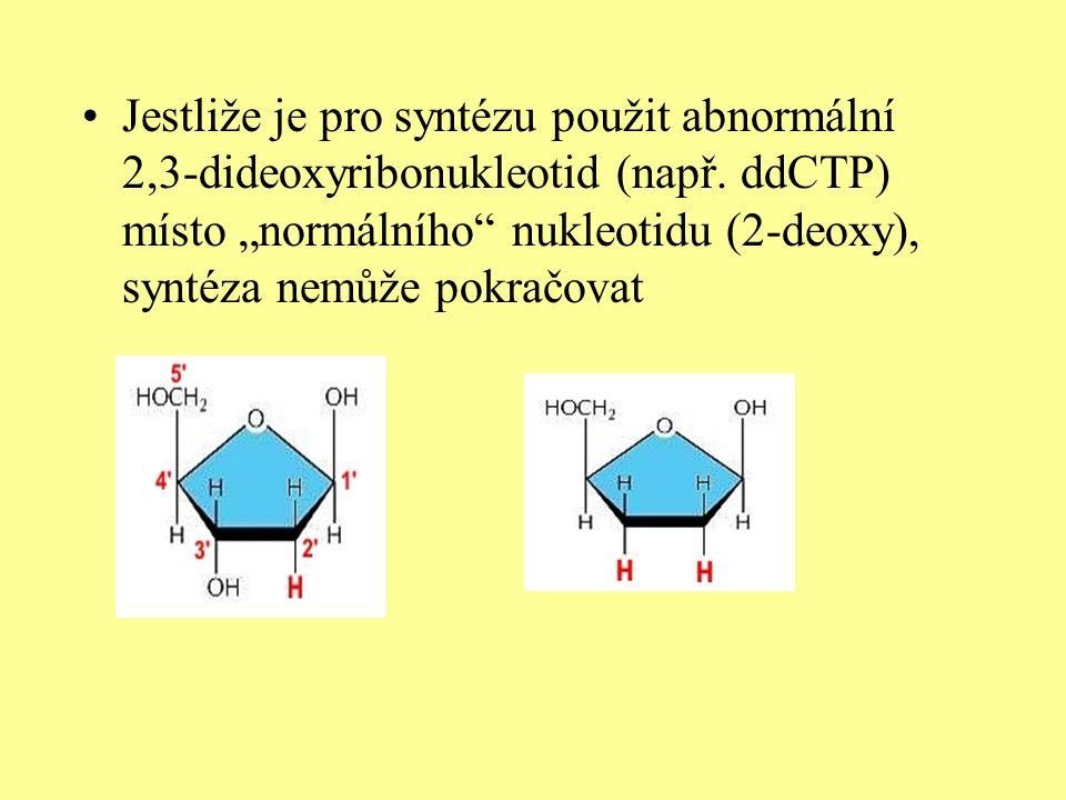 """Z toho plyne: pokud jsou ve vláknu zabudované """"normální deoxyribonukleotidy, syntéza probíhá Objeví-li se zabudovaná dideribonukleotid, syntéza je ukončena TCAGACTAT TAGC chybí OH-skupina AGTCTGATAATCGCTAACTGACCTGCACGTAAGCTGC"""