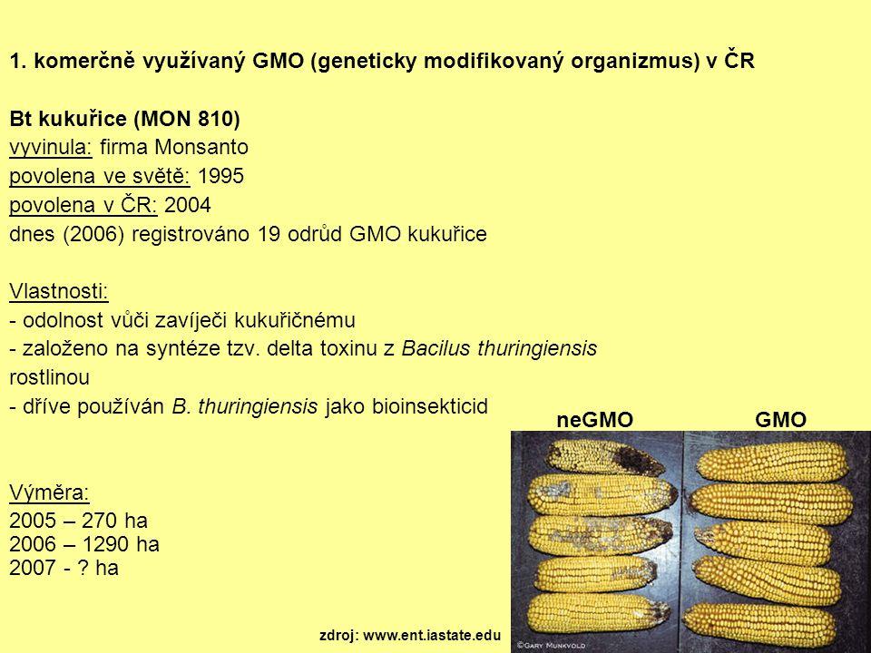 1. komerčně využívaný GMO (geneticky modifikovaný organizmus) v ČR Bt kukuřice (MON 810) vyvinula: firma Monsanto povolena ve světě: 1995 povolena v Č