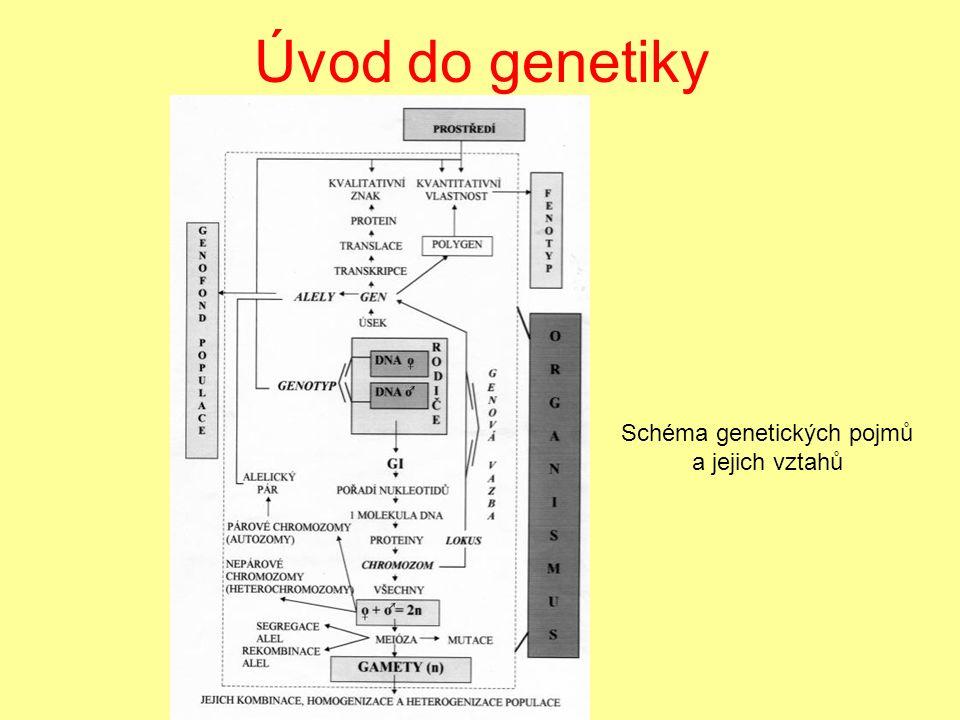 Úvod do genetiky Schéma genetických pojmů a jejich vztahů