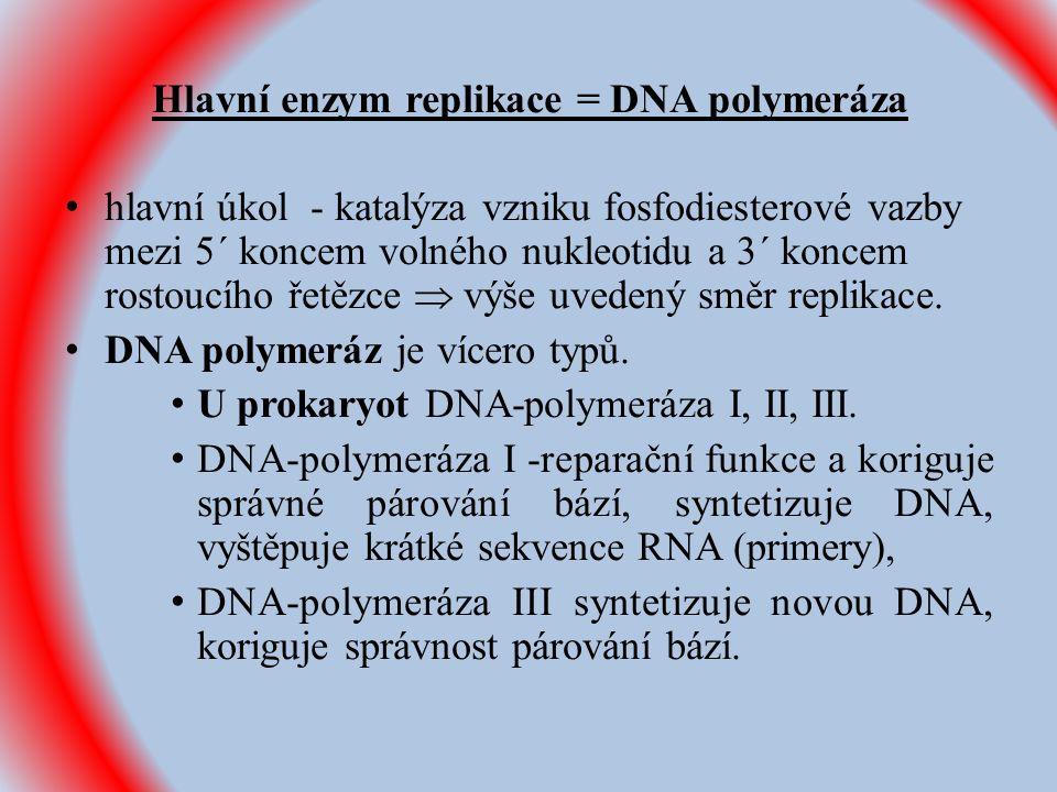Hlavní enzym replikace = DNA polymeráza hlavní úkol - katalýza vzniku fosfodiesterové vazby mezi 5´ koncem volného nukleotidu a 3´ koncem rostoucího řetězce  výše uvedený směr replikace.