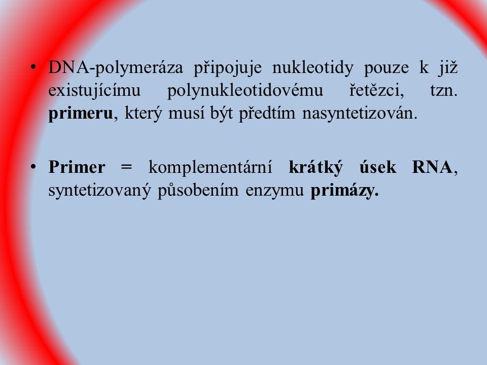 DNA-polymeráza připojuje nukleotidy pouze k již existujícímu polynukleotidovému řetězci, tzn.