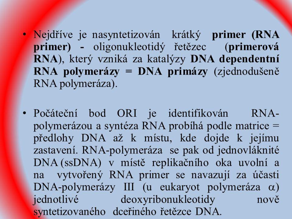 Nejdříve je nasyntetizován krátký primer (RNA primer) - oligonukleotidý řetězec (primerová RNA), který vzniká za katalýzy DNA dependentní RNA polymerázy = DNA primázy (zjednodušeně RNA polymeráza).