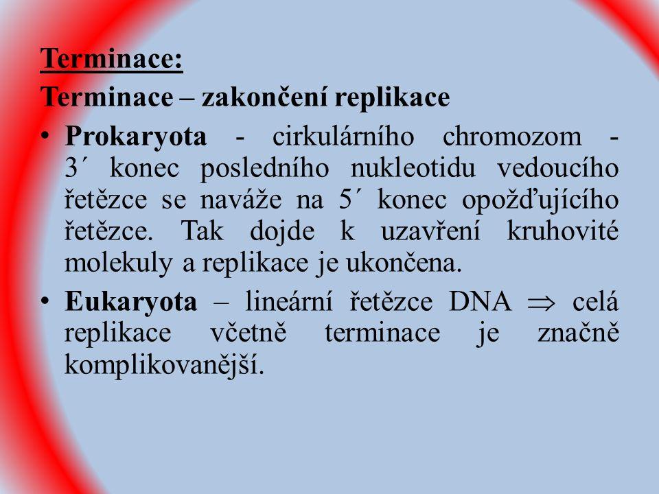 Terminace: Terminace – zakončení replikace Prokaryota - cirkulárního chromozom - 3´ konec posledního nukleotidu vedoucího řetězce se naváže na 5´ konec opožďujícího řetězce.