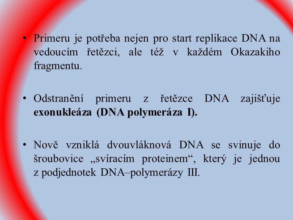 Primeru je potřeba nejen pro start replikace DNA na vedoucím řetězci, ale též v každém Okazakiho fragmentu.