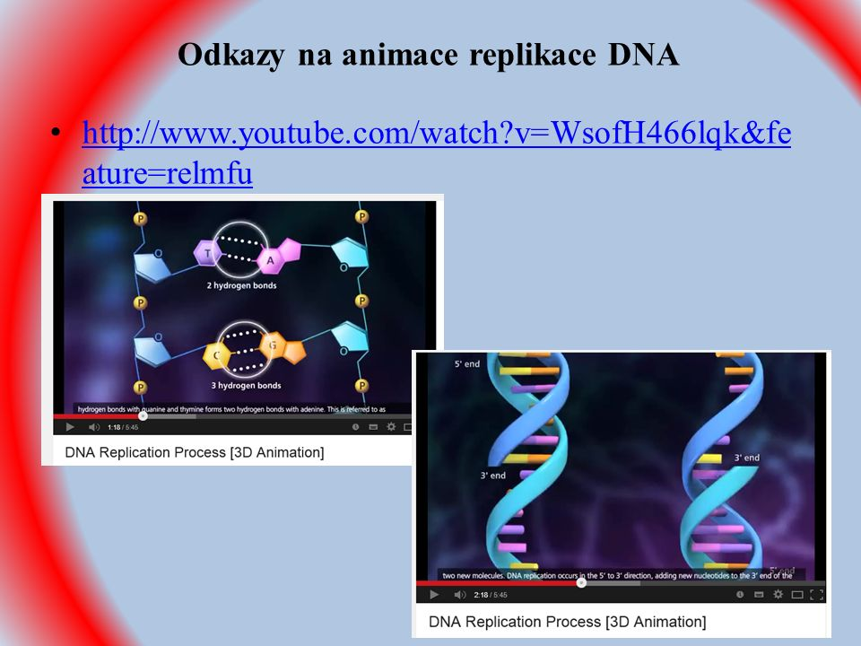 Odkazy na animace replikace DNA http://www.youtube.com/watch v=WsofH466lqk&fe ature=relmfu http://www.youtube.com/watch v=WsofH466lqk&fe ature=relmfu