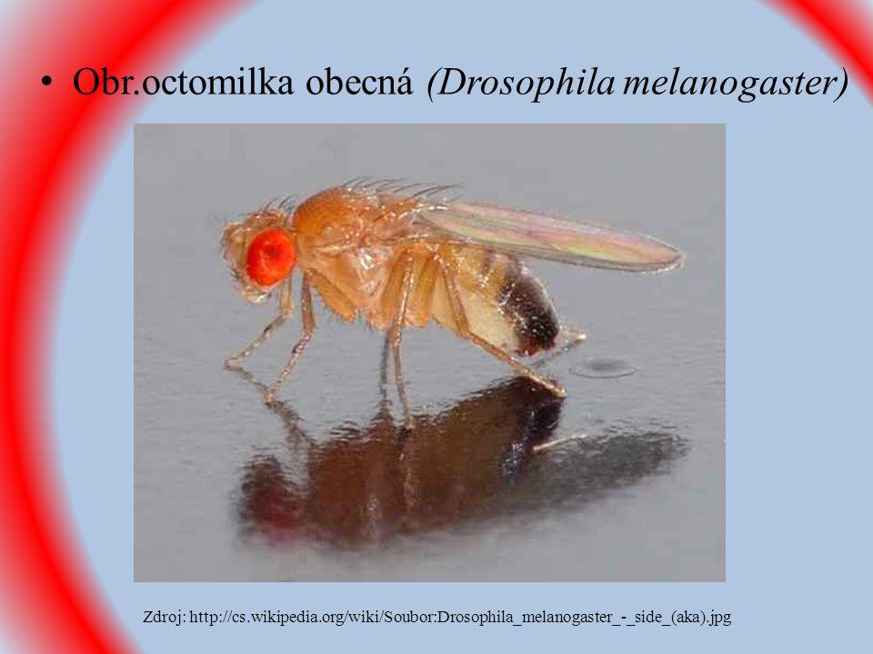 Obr.octomilka obecná (Drosophila melanogaster) Zdroj: http://cs.wikipedia.org/wiki/Soubor:Drosophila_melanogaster_-_side_(aka).jpg