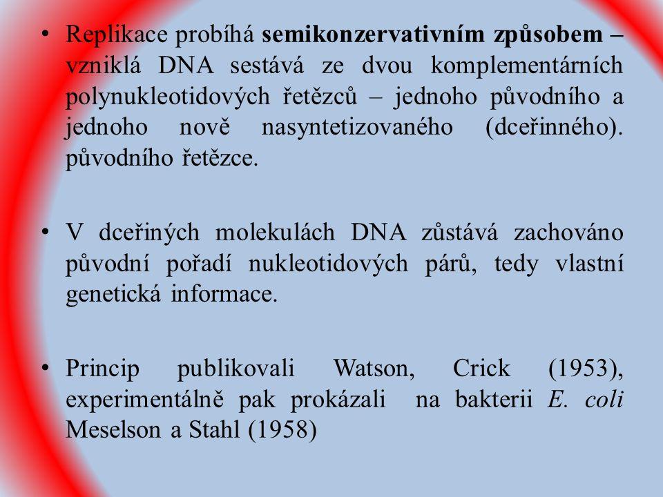 Replikace probíhá semikonzervativním způsobem – vzniklá DNA sestává ze dvou komplementárních polynukleotidových řetězců – jednoho původního a jednoho nově nasyntetizovaného (dceřinného).