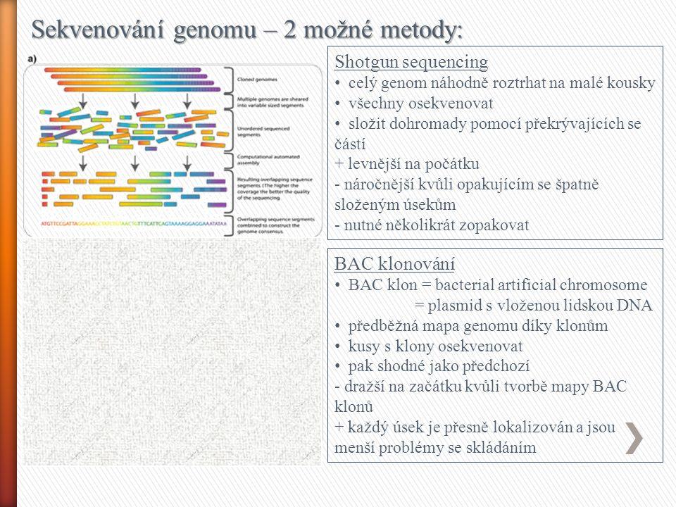 Sekvenování genomu – 2 možné metody: Shotgun sequencing celý genom náhodně roztrhat na malé kousky všechny osekvenovat složit dohromady pomocí překrývajících se částí + levnější na počátku - náročnější kvůli opakujícím se špatně složeným úsekům - nutné několikrát zopakovat BAC klonování BAC klon = bacterial artificial chromosome = plasmid s vloženou lidskou DNA předběžná mapa genomu díky klonům kusy s klony osekvenovat pak shodné jako předchozí - dražší na začátku kvůli tvorbě mapy BAC klonů + každý úsek je přesně lokalizován a jsou menší problémy se skládáním