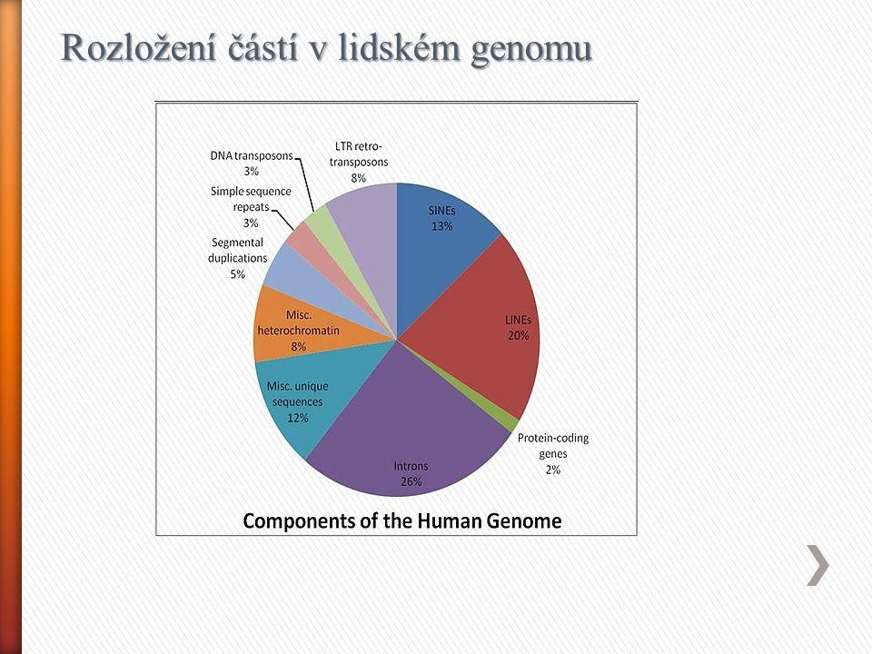 Rozložení částí v lidském genomu