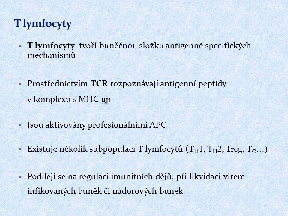  T lymfocyty tvoří buněčnou složku antigenně specifických mechanismů  Prostřednictvím TCR rozpoznávají antigenní peptidy v komplexu s MHC gp  Jsou aktivovány profesionálními APC  Existuje několik subpopulací T lymfocytů (T H 1, T H 2, Treg, T C …)  Podílejí se na regulaci imunitních dějů, při likvidaci virem infikovaných buněk či nádorových buněk