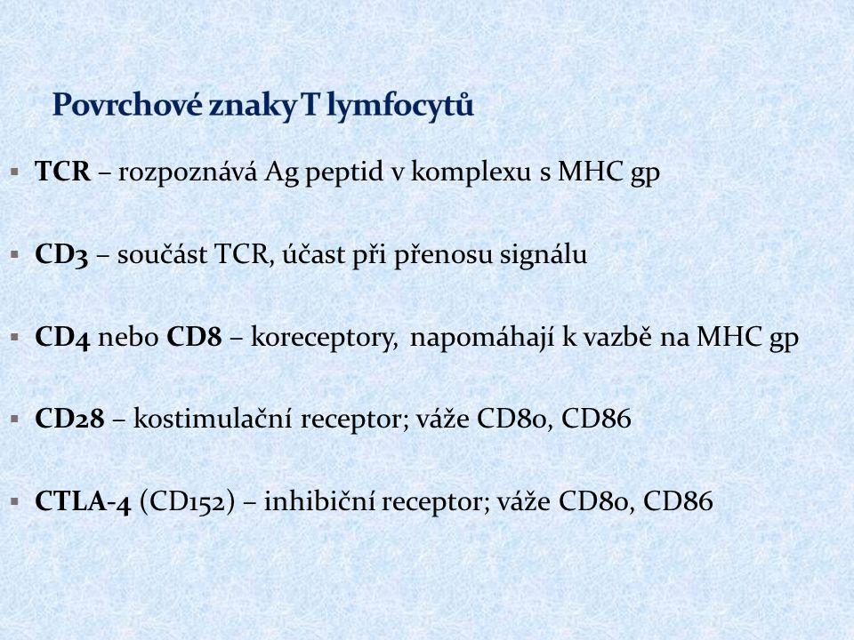  TCR – rozpoznává Ag peptid v komplexu s MHC gp  CD3 – součást TCR, účast při přenosu signálu  CD4 nebo CD8 – koreceptory, napomáhají k vazbě na MHC gp  CD28 – kostimulační receptor; váže CD80, CD86  CTLA-4 (CD152) – inhibiční receptor; váže CD80, CD86