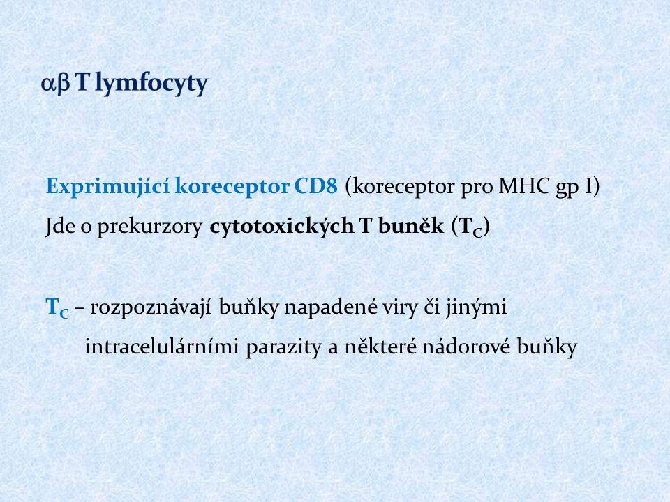 Exprimující koreceptor CD8 (koreceptor pro MHC gp I) Jde o prekurzory cytotoxických T buněk (T C ) T C – rozpoznávají buňky napadené viry či jinými intracelulárními parazity a některé nádorové buňky