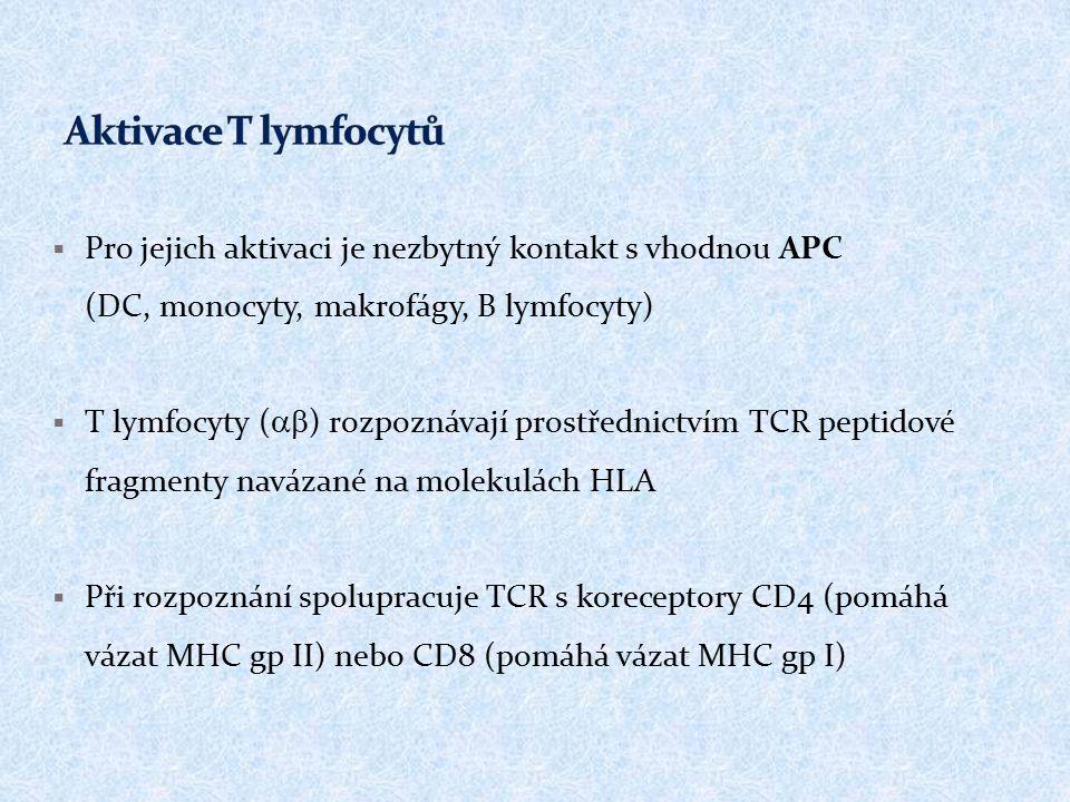  Pro jejich aktivaci je nezbytný kontakt s vhodnou APC (DC, monocyty, makrofágy, B lymfocyty)  T lymfocyty (  ) rozpoznávají prostřednictvím TCR peptidové fragmenty navázané na molekulách HLA  Při rozpoznání spolupracuje TCR s koreceptory CD4 (pomáhá vázat MHC gp II) nebo CD8 (pomáhá vázat MHC gp I)