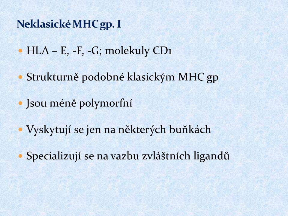 HLA – E, -F, -G; molekuly CD1 Strukturně podobné klasickým MHC gp Jsou méně polymorfní Vyskytují se jen na některých buňkách Specializují se na vazbu zvláštních ligandů