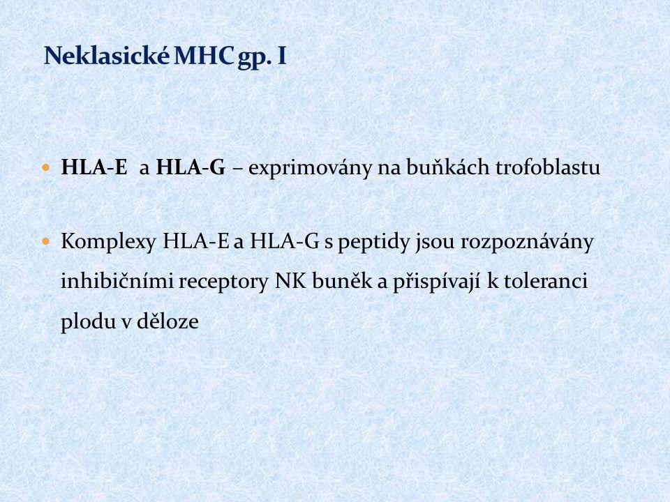 HLA-E a HLA-G – exprimovány na buňkách trofoblastu Komplexy HLA-E a HLA-G s peptidy jsou rozpoznávány inhibičními receptory NK buněk a přispívají k toleranci plodu v děloze