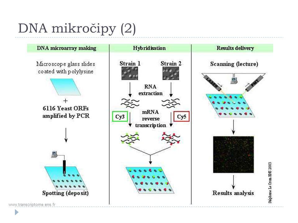 DNA mikročipy (2) www.transcriptome.ens.fr