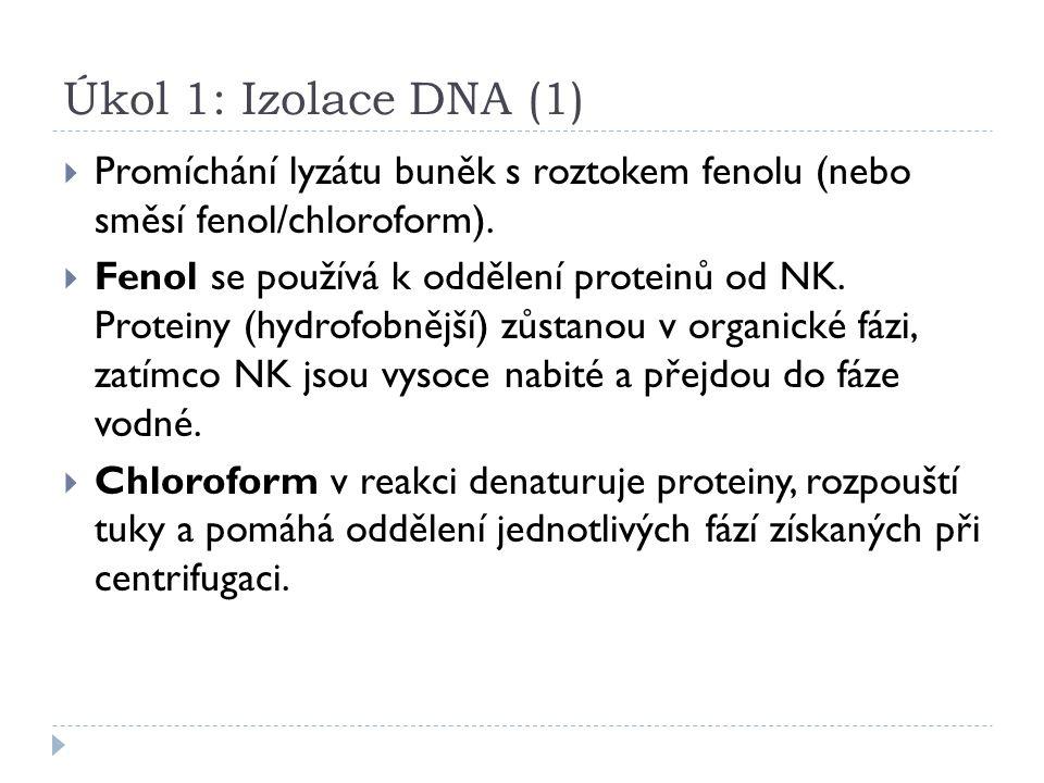Úkol 1: Izolace DNA (1)  Promíchání lyzátu buněk s roztokem fenolu (nebo směsí fenol/chloroform).  Fenol se používá k oddělení proteinů od NK. Prote