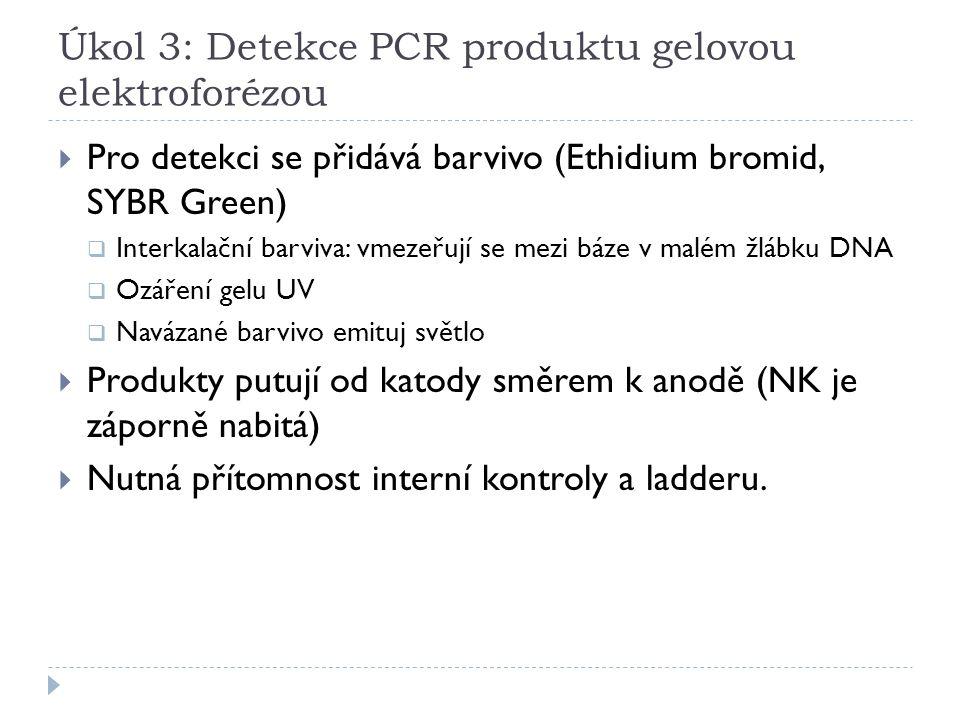 Úkol 3: Detekce PCR produktu gelovou elektroforézou  Pro detekci se přidává barvivo (Ethidium bromid, SYBR Green)  Interkalační barviva: vmezeřují s