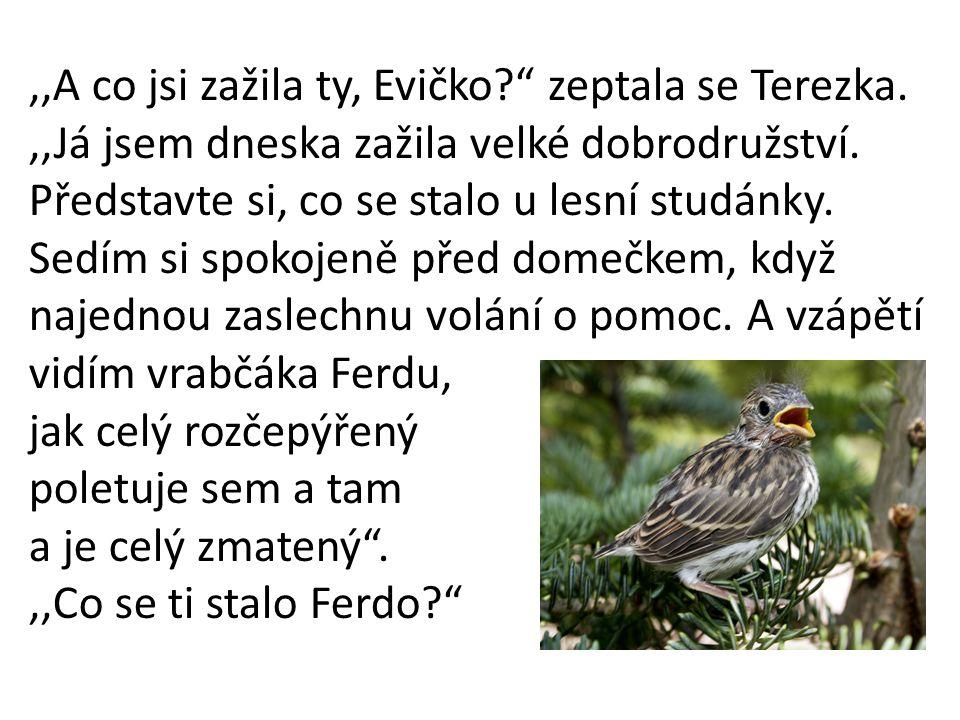 ,,A co jsi zažila ty, Evičko zeptala se Terezka.,,Já jsem dneska zažila velké dobrodružství.