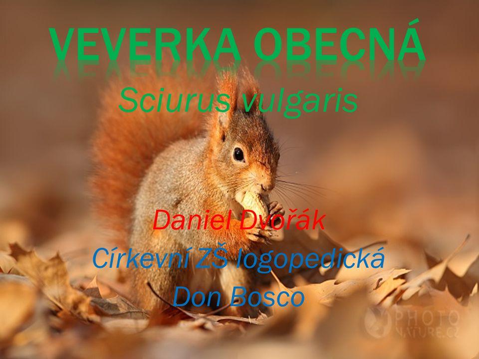 Sciurus vulgaris Daniel Dvořák Církevní ZŠ logopedická Don Bosco