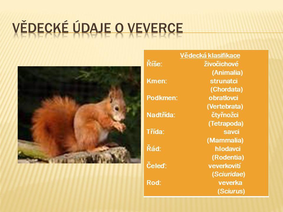 Vědecká klasifikace Říše: živočichové (Animalia) Kmen: strunatci (Chordata) Podkmen: obratlovci (Vertebrata) Nadtřída: čtyřnožci (Tetrapoda) Třída: savci (Mammalia) Řád: hlodavci (Rodentia) Čeleď: veverkovití (Sciuridae) Rod: veverka (Sciurus)