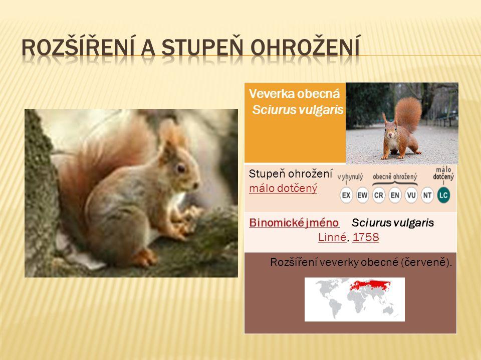 Veverka obecná Sciurus vulgaris Stupeň ohrožení málo dotčený Binomické jménoBinomické jméno Sciurus vulgaris Linné, 1758Linné1758 Rozšíření veverky obecné (červeně).