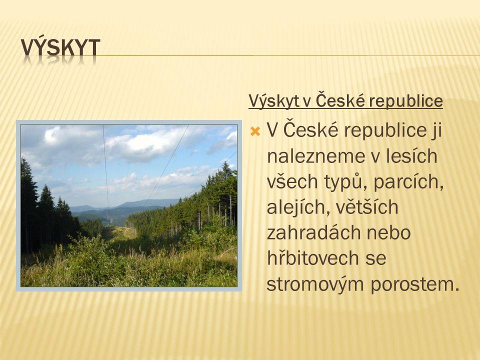 Výskyt v České republice VV České republice ji nalezneme v lesích všech typů, parcích, alejích, větších zahradách nebo hřbitovech se stromovým porostem.