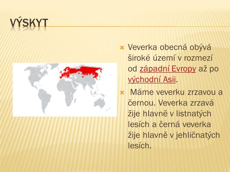  Veverka obecná obývá široké území v rozmezí od západní Evropy až po východní Asii.západní Evropy východní Asii  Máme veverku zrzavou a černou.