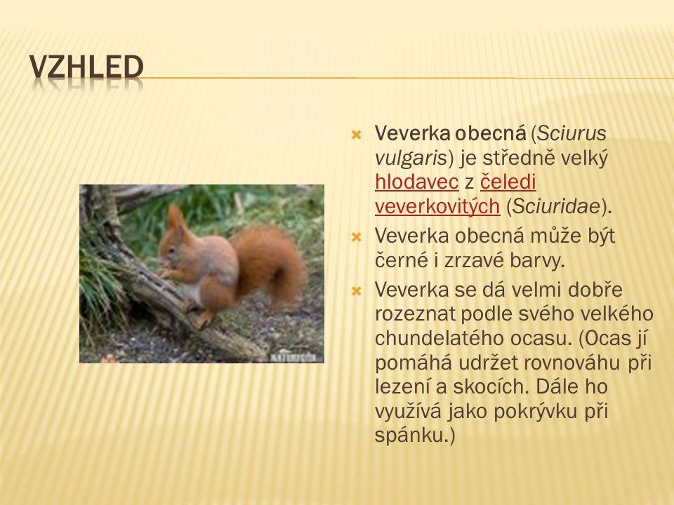  Veverka obecná (Sciurus vulgaris) je středně velký hlodavec z čeledi veverkovitých (Sciuridae).