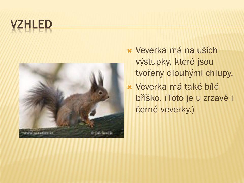  Zdroj - internet http://cs.wikipedia.org/wiki/Hl avn%C3%AD_strana http://obrazky.cz/?q=veverka http://www.naturephoto cz.eu/mammalia.html  Tak jděte a ochraňujte veverky.