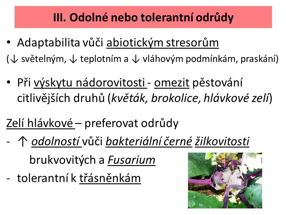 III. Odolné nebo tolerantní odrůdy Adaptabilita vůči abiotickým stresorům (↓ světelným, ↓ teplotním a ↓ vláhovým podmínkám, praskání) Při výskytu nádo