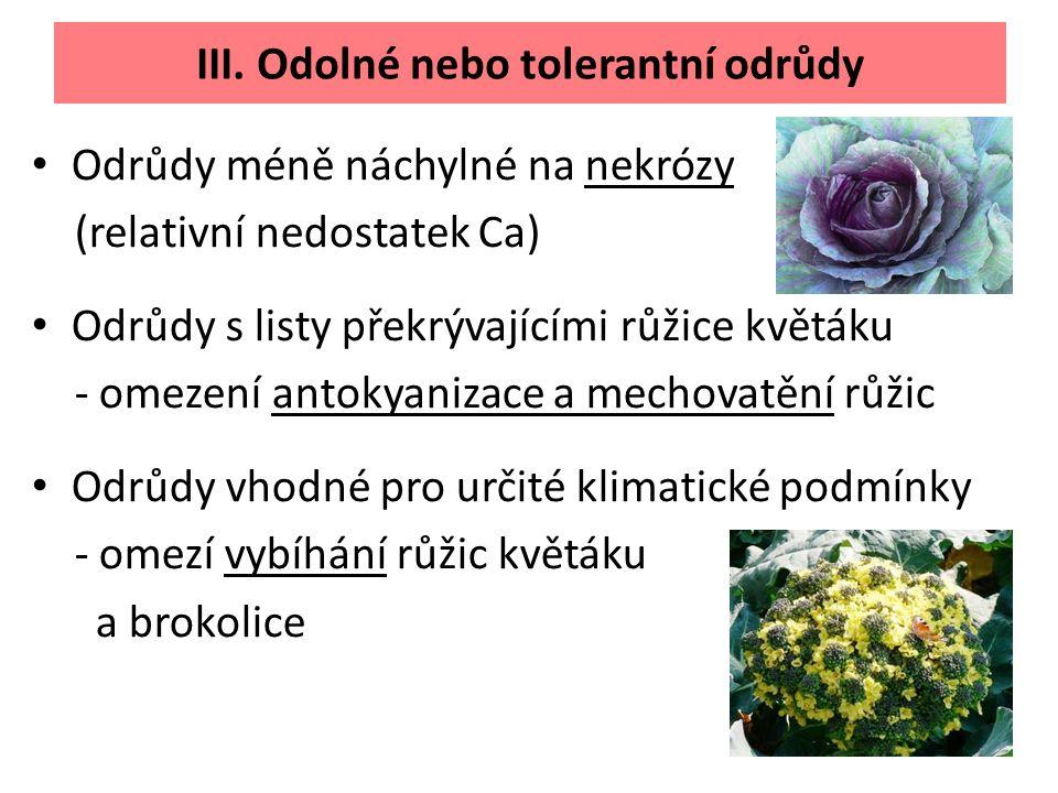 Odrůdy méně náchylné na nekrózy (relativní nedostatek Ca) Odrůdy s listy překrývajícími růžice květáku - omezení antokyanizace a mechovatění růžic Odrůdy vhodné pro určité klimatické podmínky - omezí vybíhání růžic květáku a brokolice III.